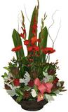 NATALIA - Basket Arrangement